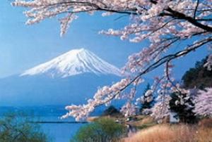 Japonia Festivalul Ciresilor in Floare 2021